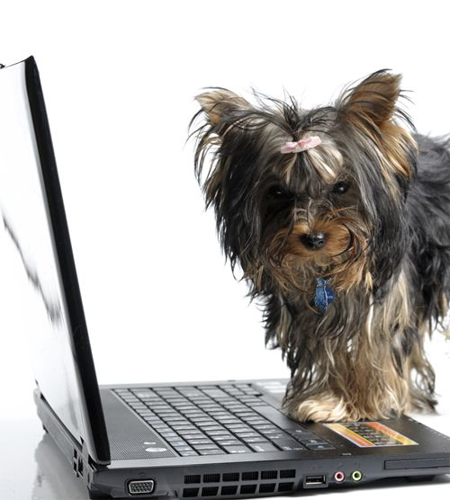 dogs-online